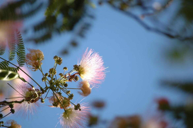 Blume und Fokus